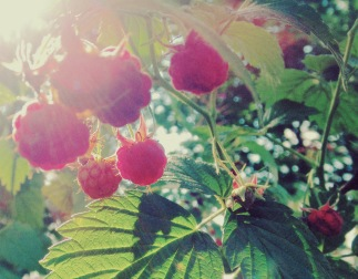 dfbm_Raspberries_Flickr_CC 2.0